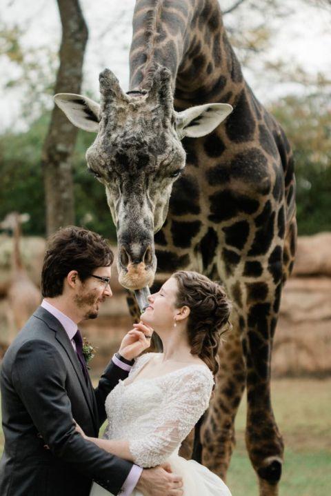 nashville elopement - nashville zoo - nashville wedding planner
